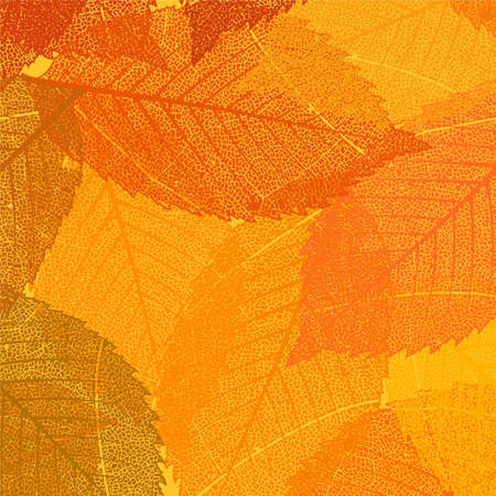 dry: Dry autumn leaves template. EPS 8 vector file included