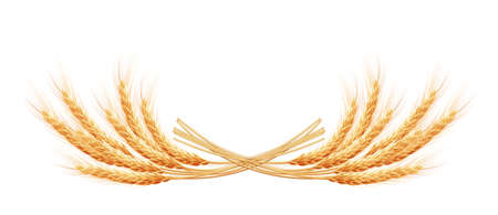 reaping: Wheat ears with space for text. EPS 10 vector file included