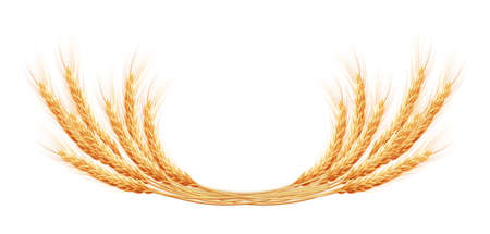 tuft: Wheat ears with space for text. EPS 10 vector file included