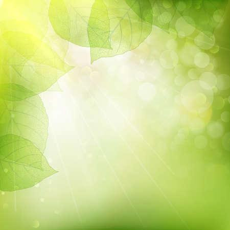 linden tree: Background of green leaves, summer or spring season. EPS 10 vector file included Illustration