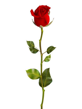 Valentines Day Sweet Red Roses. EPS 10 vector file included Vettoriali