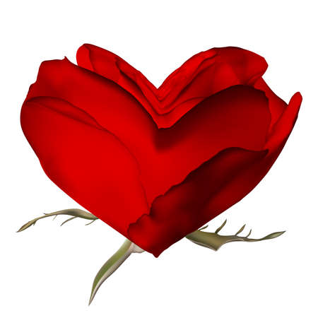 Stylish red rose isolated on white. EPS 10 vector file included