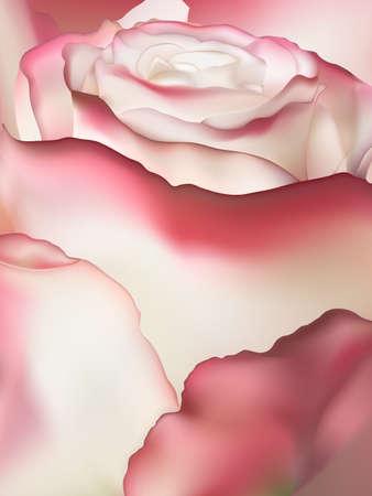 tenderness: Pink rose macro. EPS 10 vector file included Illustration