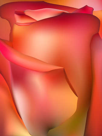 orange rose: Orange rose macro. EPS 10 vector file included Illustration