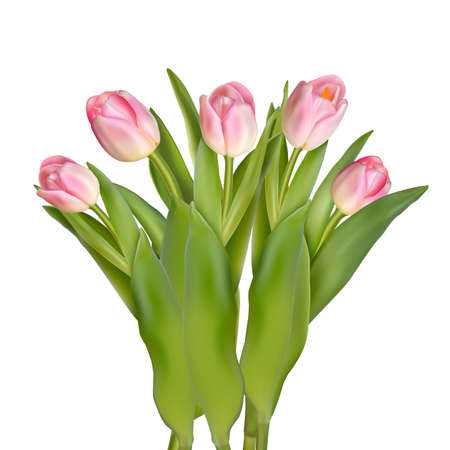 blossoming: Blossoming tulips decorative border over white background with space for text. EPS 10 vector file included