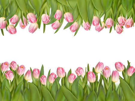 blossoming: Blossoming tulips decorative border over white background with copy space.