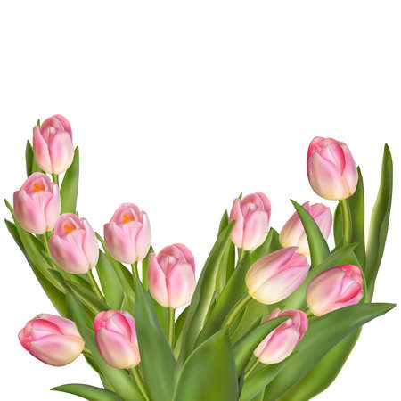 tulips isolated on white background: Beautiful bouquet of tulips on a white background. EPS 10 vector file included
