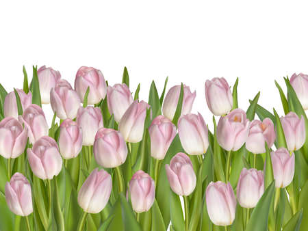 pink flowers: Holiday background with pink flowers.