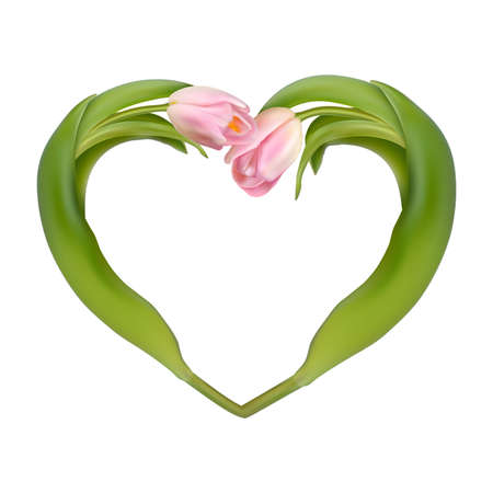 bosom: Heart from two tulips on a white background.