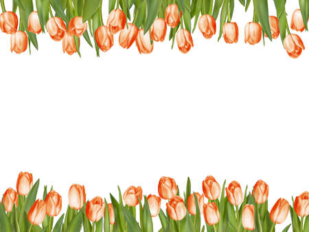 tulips isolated on white background: Isolated tulip frame arrangement, on a white background.