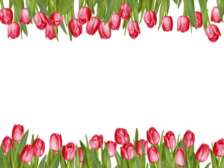 frameworks: Isolated tulip frame arrangement, on a white background.