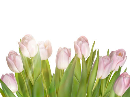 flowers bouquet: Tulips isolated on white.