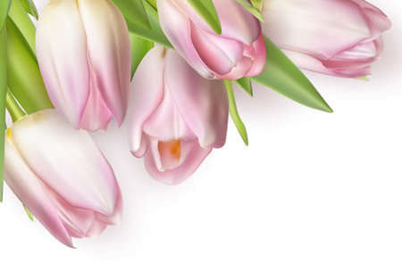 buds: Beautiful bouquet of pink tulips, isolated on white. Illustration