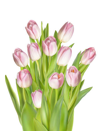 macro flowers: Fresh pink tulips isolated on white, top view. Illustration