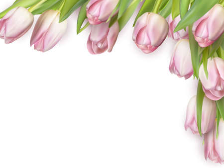 flower bright: Fresh pink tulips isolated on white, top view. Illustration