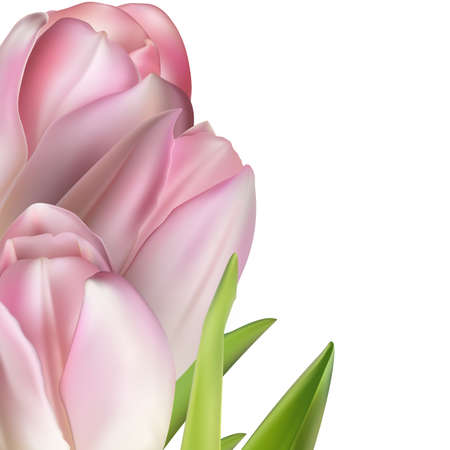 springy: Pink tulips on white.