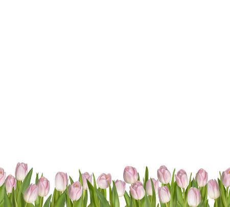 macro flowers: Spring seamless border background.