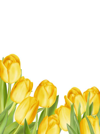 harmony nature: Isolated tulip frame arrangement, on a white background. EPS 10 vector file included