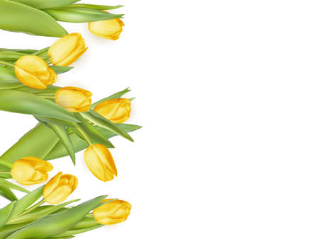 arrangement: Isolated tulip frame arrangement, on a white background. EPS 10 vector file included
