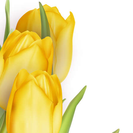 floret: Tulips decorative background with copy space. EPS 10 vector file included