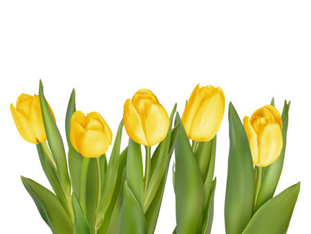 leaves border: Holiday background with bouquet of yellow tulips. EPS 10 vector file included