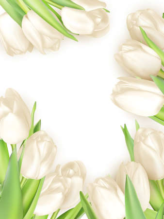 white tulip: Isolated tulip frame arrangement, on a white background.