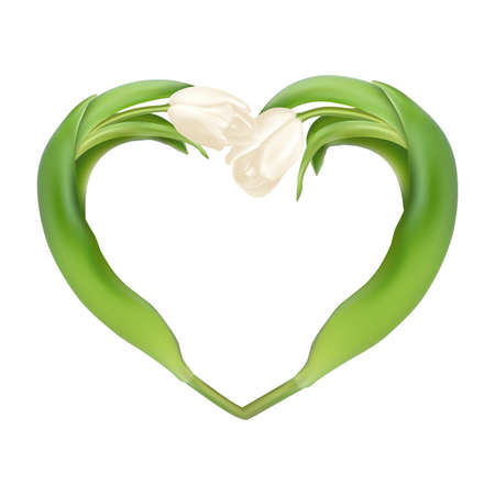 arrangements: Idea for Valentines day. Heart from two tulips on a white background.