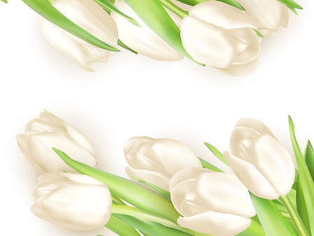 tulips isolated on white background: Isolated tulip frame arrangement, on a white background. EPS 10 vector file included