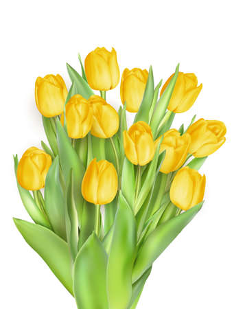 tulips isolated on white background: Bunch of tulips isolated on white background. EPS 10 vector file included Illustration