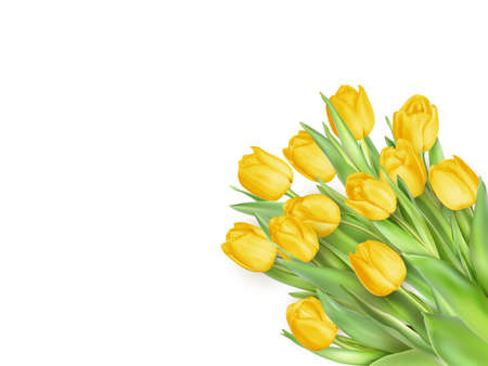 tulips isolated on white background: Tulip. Pinktulips, bouquet of tulips. Isolated tulips on white background. EPS 10 vector file included