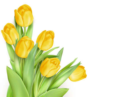 head shot: Tulip. Pinktulips, bouquet of tulips. Isolated tulips on white background. EPS 10 vector file included