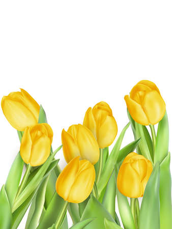 head shot: Tulip flowers isolated. EPS 10 vector file included
