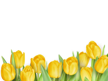fresh flowers: Fresh spring tulip flowers as a holiday postcard design. EPS 10 vector file included