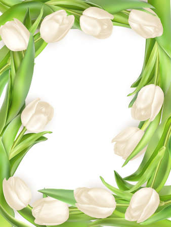 arrangement: Isolated tulip frame arrangement, on a white background.