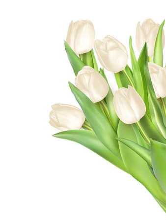 showering: Tulips decorative background with copy space. EPS 10 vector file included