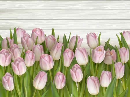 mother s: Tulips on wooden background with space for message. Mother s Day background. Top view.  vector file included
