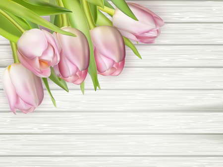 macro flowers: Pink tulips on white wooden background. vector file included