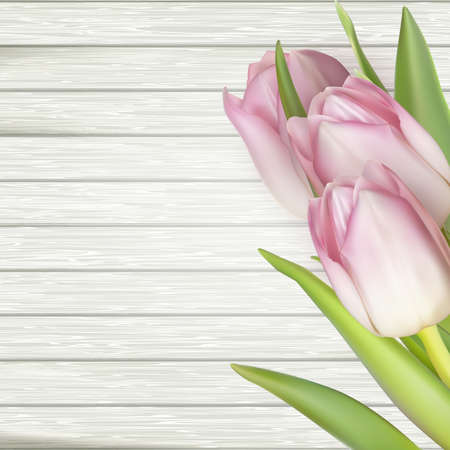 white wood: Pink tulips over white wood table.  vector file included