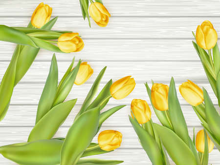 holland: Yellow tulips on rustic, wooden background. vector file included