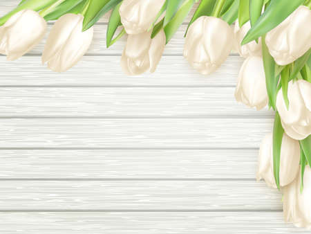 white tulip: White tulip on old gray wooden background, spring card.  vector file included Illustration