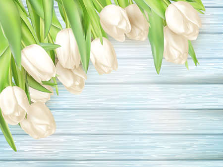 painted wood: Fresh white tulips on turquoise painted wood planks. Place for text. vector file included Illustration