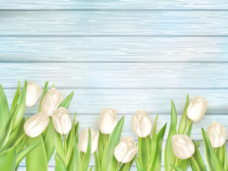 coloured background: Bouquet of white tulips on turquoise painted a wooden background.  vector file included Illustration