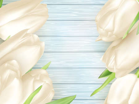 white tulip: White tulip on turquoise painted wooden background, spring card.  vector file included Illustration
