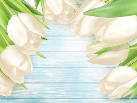 white tulip: White tulip on turquoise painted wooden background, spring card.vector file included Illustration