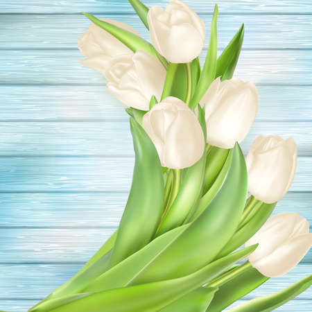 painted wood: Fresh white tulips on turquoise painted wood planks. Place for text.  vector file included