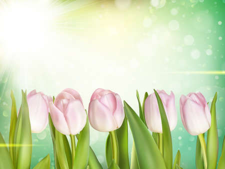 Beautiful tulips background. EPS 10 vector file included Illustration