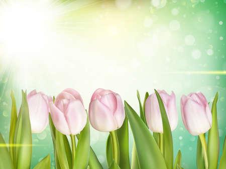tulipa: Beautiful tulips background. EPS 10 vector file included Illustration