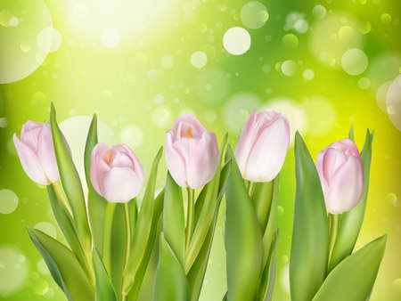 bokeh message: Bouquet of pink tulips on bokeh background with space for message. Valentines Day and Mothers Day background. Soft focus. EPS 10 vector file included