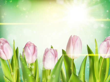 bosom: Bunch of fresh pink tulips close up over green bokeh background. EPS 10 vector file included Illustration