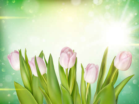 garden flowers: Bouquet of pink tulips on bokeh background. EPS 10 vector file included Illustration